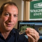 Wright State researcher finds emerald ash borer may have spread to different tree