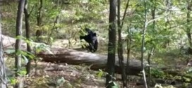 Hiker Snapped Final Photo Before Bear Attack in New Jersey (Video)