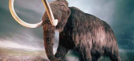 Scientists debate science, ethics of cloning wooly mammoth