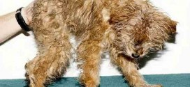 Starving B.C. Puppies rescued near Ladysmith