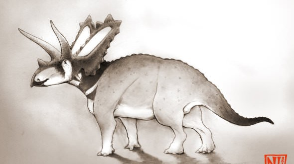 Two new species of horned dinosaurs discovered from museum fossils
