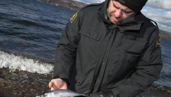 how to become an ecologist in canada