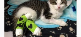 Pedro the kitten's rescuer facing fraud (Video)