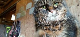 At 29, cat may be world's oldest (Photo)