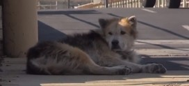 Dog Rescue : Mufasa the dog's second chance goes viral (Video)