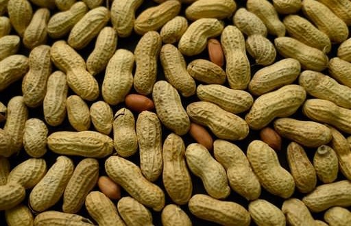 Peanut allergy can be reduced by eating peanuts, study shows