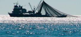 Scientists propose high seas fishing moratorium