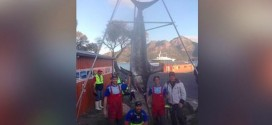 580 Pound Swordfish : Tasmanian Fishermen Catch Swordfish After Six-Hour Battle (Video)