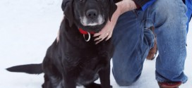 Blind Dog Returned To Owner : After being lost for two weeks in the cold blind dog saved