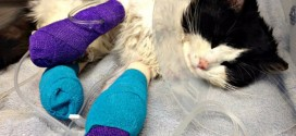 Donors Rally to Save Cat Found Bound in Tape (Video)