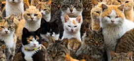 Feral cats rule over Japanese island (Video)