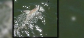 Sharks spotted near Jacksonville Beach pier in florida