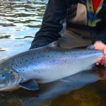 Atlantic Salmon Federation Concerned Government Didn't Notify Public Of Virus, Report