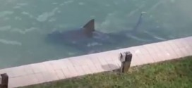 Bull Shark Spotted Swimming Close to Florida Condos (Video)