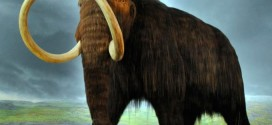 Researchers fully decode a pair of mammoth DNA genomes