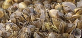 Manitoba ramps up efforts to curb spread of zebra mussels (Video)