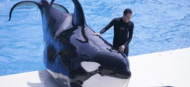 SeaWorld San Diego Cited For Safety Violations