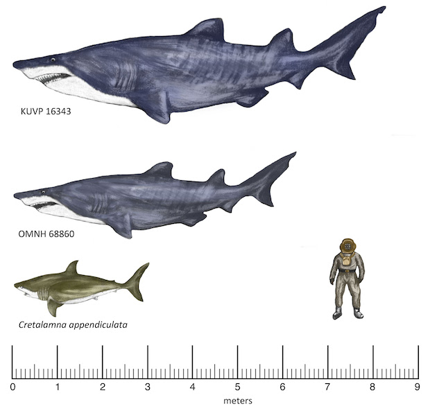 20-foot gigantic shark fossils found in Texas - Canada Journal - News of the World