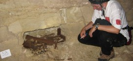 8 Million Mummified Dogs, Other Animals Unearthed In Catacombs at Egypt site 'Video'