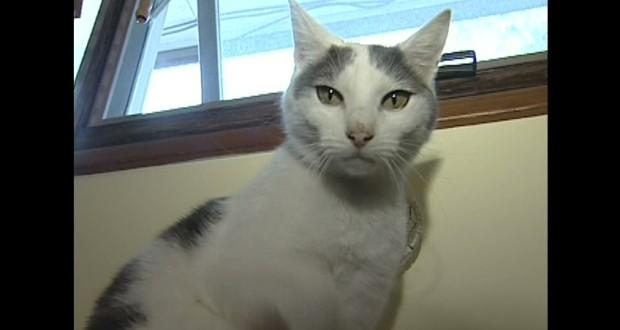 Arrest Made in Dead Cat Case : Police