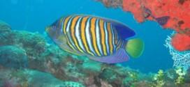 CO2 emissions threaten ocean crisis, Study