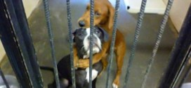 "Hugging dogs find home? ""Viral photo"" saves pair from being put down"