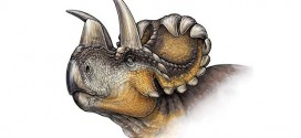 Researchers Discover a New Horned Dinosaur (Video)