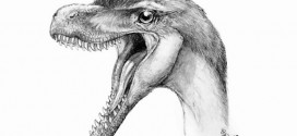 Big dino discovery in tiny teeth, Report
