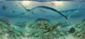 Elasmosaur : Remains of Ancient Long-Necked Marine Reptile Found in Alaska