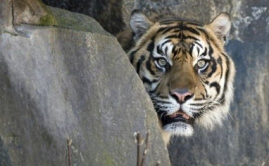 Tiger spared after fatal attack on New Zealand zoo keeper, Officials Say