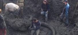 """Chelsea: Farmer finds woolly mammoth bones in Michigan field """"Video"""""""