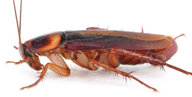 Cockroach Infestation Force Closure of Hospital Cafeteria (Video)