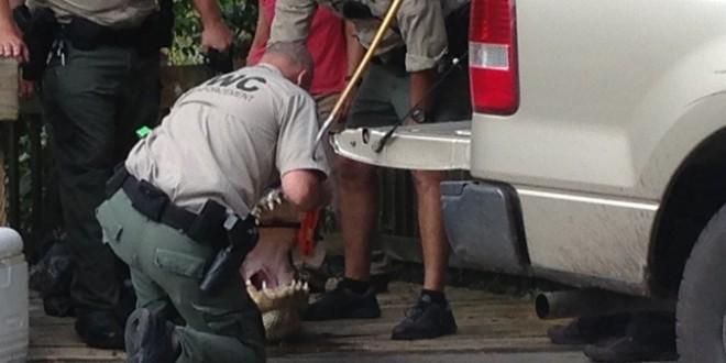 James Okkerse: Swimmer killed by alligator in Florida park (Video)
