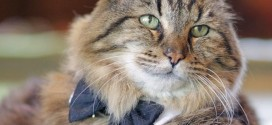 Corduroy: World's oldest cat is living the life (Video)