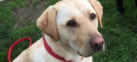Meet the dogs that smell cancer (Video)
