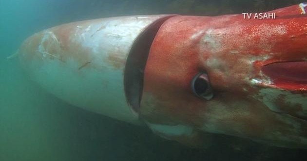 Japan: Giant squid emerges in Japanese shallow waters (Video)