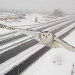 Traffic camera captures snowy owl in flight (Video)
