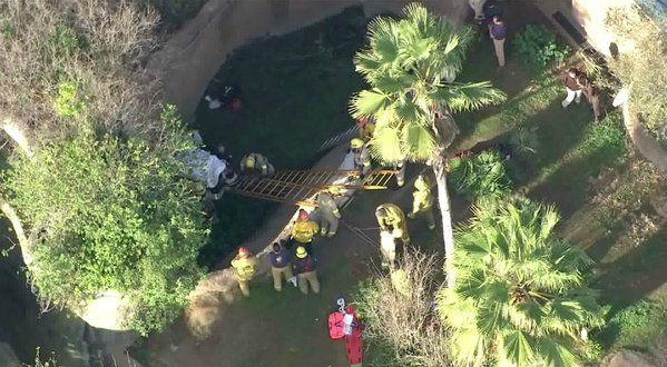 Zoo Worker Falls in Gorilla Enclosure, Fire Officials Say (Video)