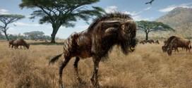 """Ancient wildebeest shared nose with duck-billed dinosaur """"Photo"""""""