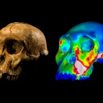 Early humans weren't nutcrackers, says new Research
