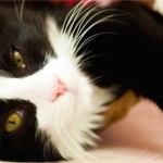 Eighty-four cats and dogs seized from breeding and boarding facility in Surrey, Report