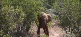 "Elephant Kills Tourist In Thailand, Injures Teen Daughter ""Report"""
