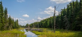 Nature Conservancy of Canada Celebrates World Wetlands Day