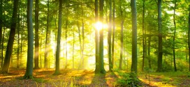 Researchers claim Europe's trees causing global warming