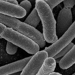 Scientists study link between mood, mental health and gut bacteria