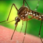 Zika virus: Indiana officials confirm first human case, Report