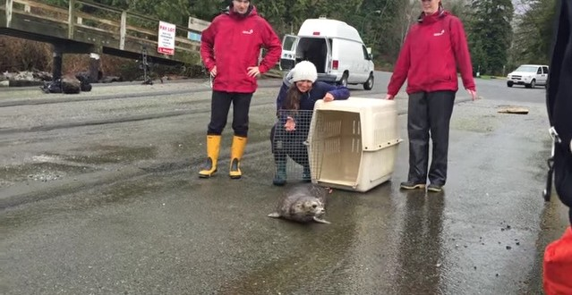 "Seal pup released after getting trapped in fishing netting ""Video"""
