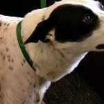 Dogs shot with arrows recovering, Report