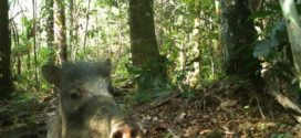 Expedition captures animal selfies in Amazon Rainforest (Photo)