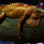 Lizards, like humans, sleep in distinct stages: Researchers Say